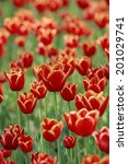 an image of tulip | Shutterstock . vector #201029741