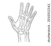 handanatom. hand bones.... | Shutterstock .eps vector #2010312161