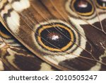Beautiful Butterfly  Close Up...