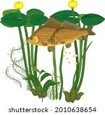 pair of crucian carp fishes... | Shutterstock .eps vector #2010638654