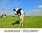 cows on farmland | Shutterstock . vector #201118649