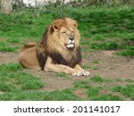 a proud lion sitting in the... | Shutterstock . vector #201141017