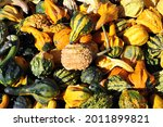 Mix Of Pumpkins And Gourds At...