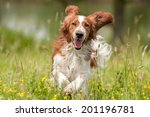 Stock photo dog 201196781