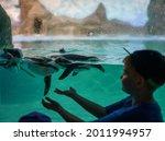 Penguin Swims In Aquarium In Zoo