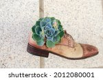 Old Shoes Reused As Flowerpot...