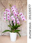 beautiful pink orchid on ceramic floor and granite marble background - stock photo