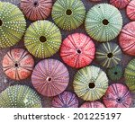 Variety Of Colorful Sea Urchins ...