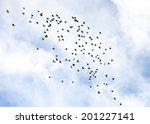 flock of feral pigeons  columba ...   Shutterstock . vector #201227141
