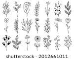 collection forest fern... | Shutterstock .eps vector #2012661011