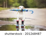 dog holding an umbrella | Shutterstock . vector #201268487