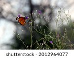 Focus On Colored Butterfly...