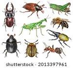 Set Of Watercolor Beetles....