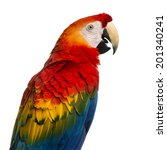 Close Up Of A Scarlet Macaw  4...