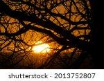 Sun Setting Through Tree...