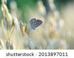 A Beautiful Butterfly On Ears...