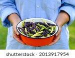 Female Farmer Holding Bowl Of...