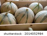 Sweet Ripe Cantalupe Melons...