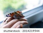 Peacock Butterfly  Aglais Io...