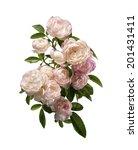 jasmine flowers isolated on... | Shutterstock . vector #201431411