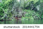 jungle at middle of lake | Shutterstock . vector #2014441754