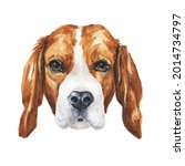 Watercolor Beagle Dog Portrait...