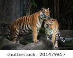 portrait of a royal bengal... | Shutterstock . vector #201479657