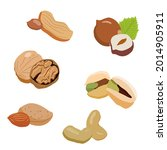 a set of nuts. nuts vitamin e   Shutterstock .eps vector #2014905911