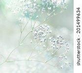 Pastel Toned Flowers
