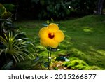 Single Gumamela Flower Yellow...