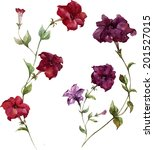 petunia  watercolor  painting | Shutterstock .eps vector #201527015