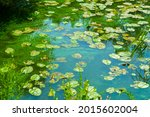 Green Water Lilies Algae In...