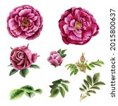 Watercolor Botanical Set Of...