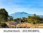 Zebra. Travel To Exotic Africa. ...