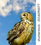 Eurasian Eagle Owl Latin Name...