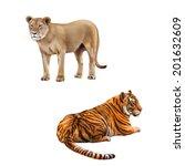 Lioness   Panthera Leo ...