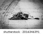 Fox Carcass On A Gravel Road....