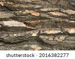 Close up of bark on tree stump. ...