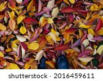 Small photo of background of bright autumn leaves fallen to the ground, top view of feet in galoshes with copy space during a walk in the forest.