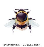cute bumblebee  top view of an... | Shutterstock .eps vector #2016675554
