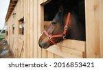 A Dark Brown Horse With A Black ...