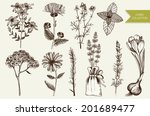 vector set of ink hand drawn... | Shutterstock .eps vector #201689477