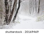 winter road | Shutterstock . vector #20169469