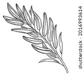 hand drawn simple olive branch... | Shutterstock .eps vector #2016993614
