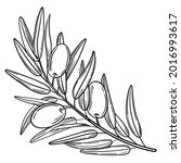 hand drawn simple olive branch... | Shutterstock .eps vector #2016993617
