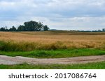 A View Of A Vast Field Full Of...