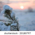 Branch Of A Fur Tree Covered B...