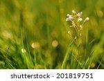 meadow flowers on a green... | Shutterstock . vector #201819751