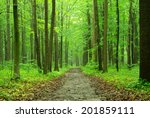 a path is in the green forest | Shutterstock . vector #201859111