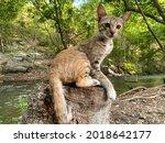 Kitten Sitting On A Log.